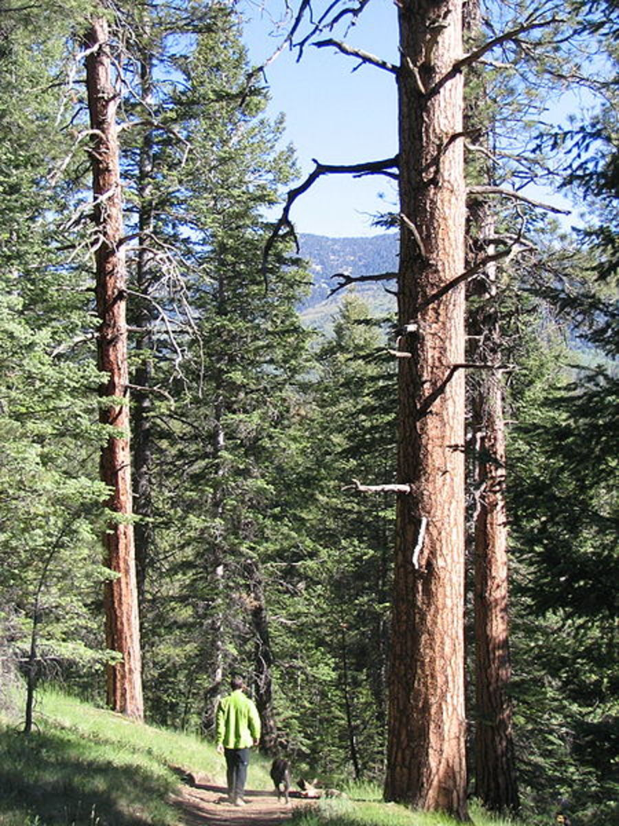 Flagstaff and Northern Arizona Resources and Activities