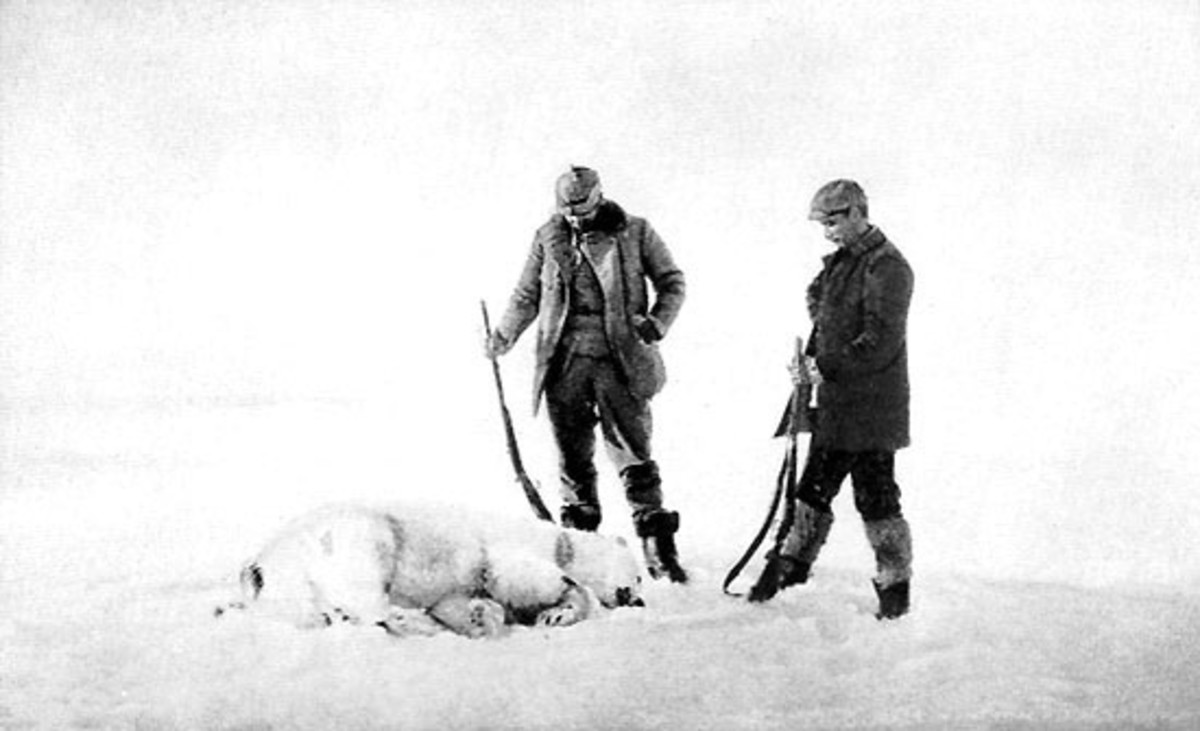 Expedition members depended upon polar bear meat to supplement their provisions during their attempted return.