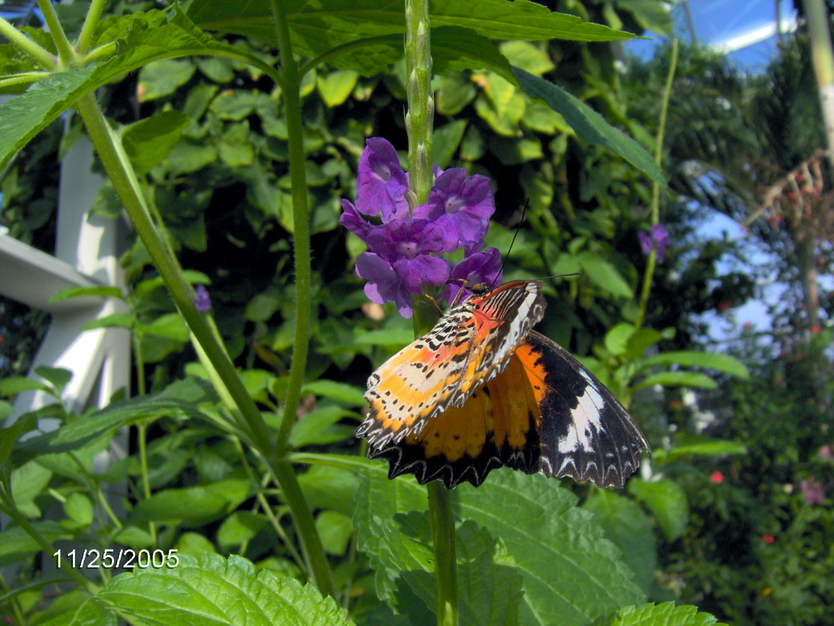 butterflies-from-around-the-world