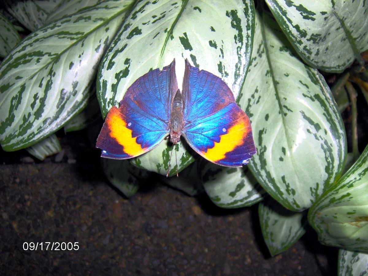 Butterflies - Species, Pictures & Information