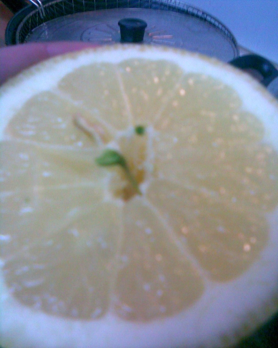 grow-citrus-trees-from-pips
