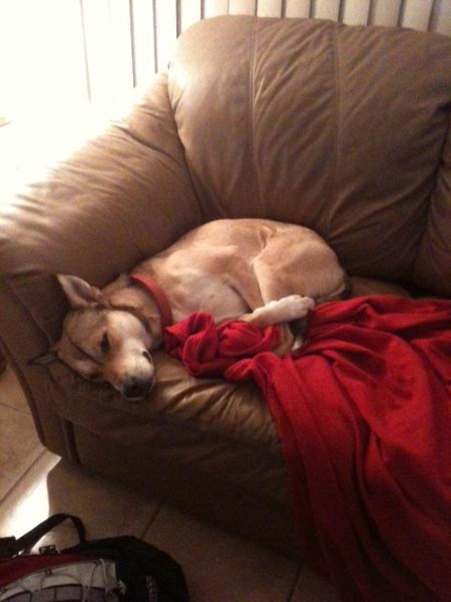 Dogs like soft places to sleep