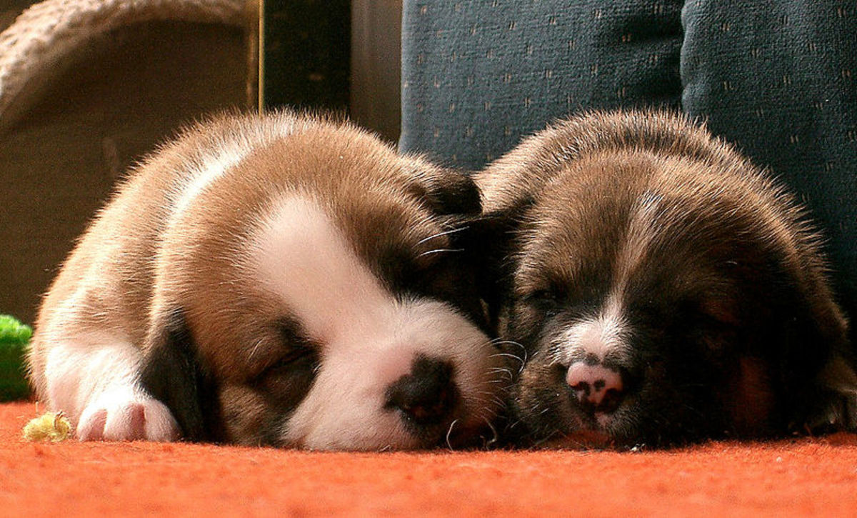 Dogs sleeping patterns are different from people