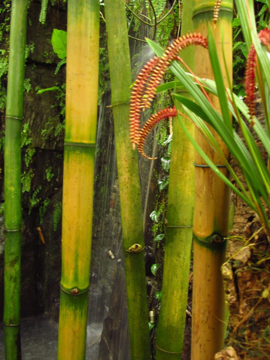 Bamboo is a grass, not a tree.