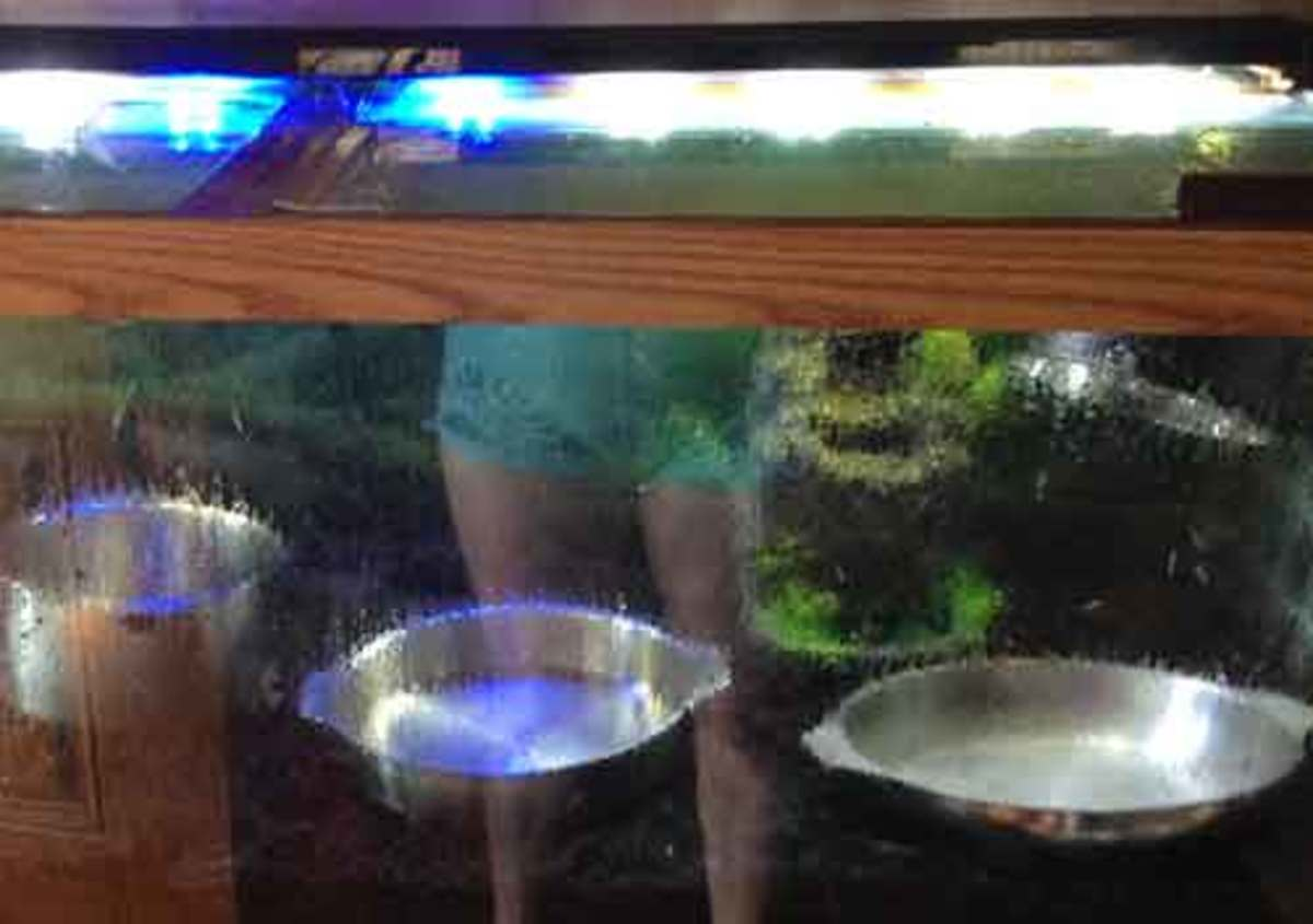 Gnats do seem to drown very easily, so I saturated the tank with steam and boiling water.