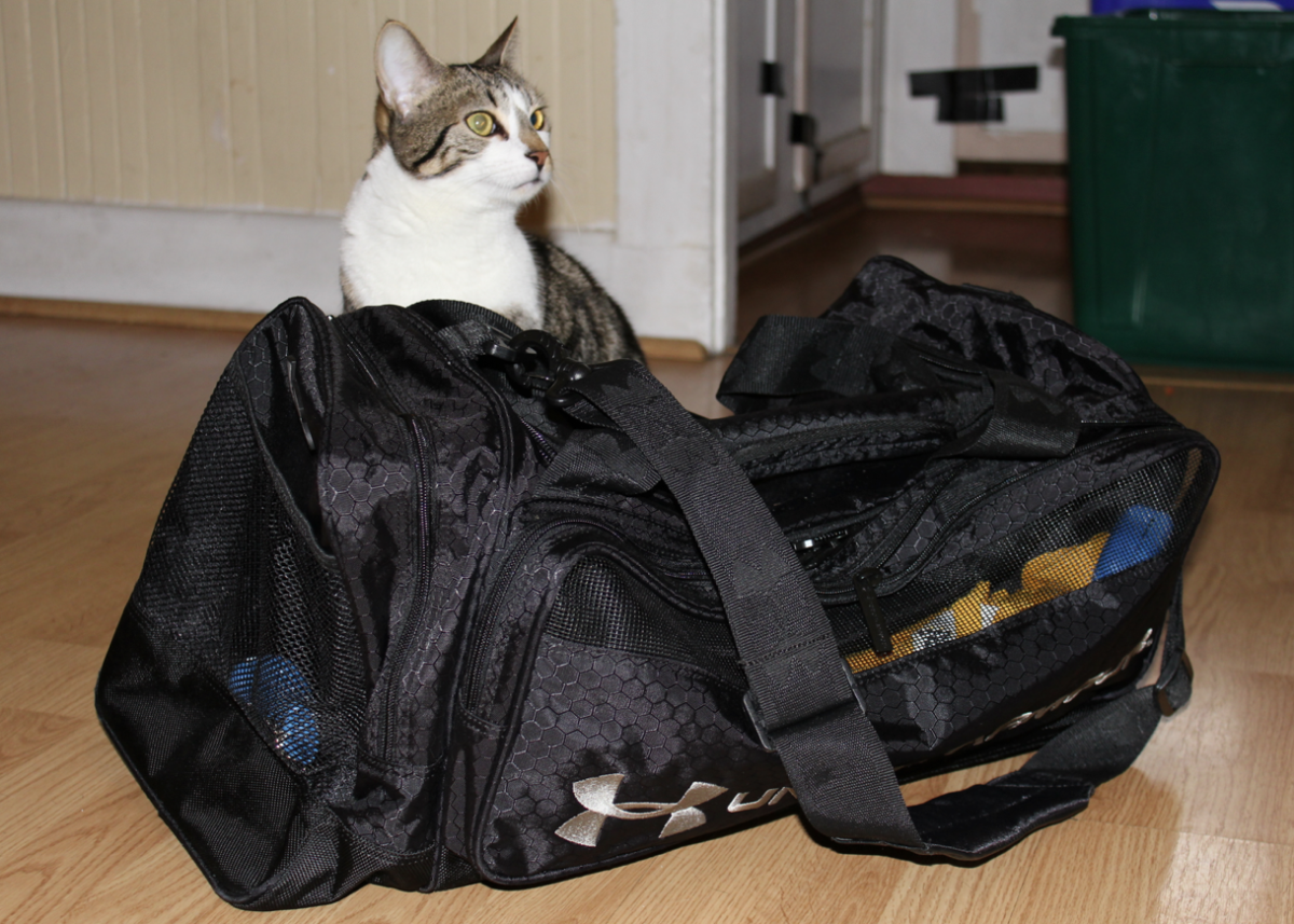 The cat behind my bag.