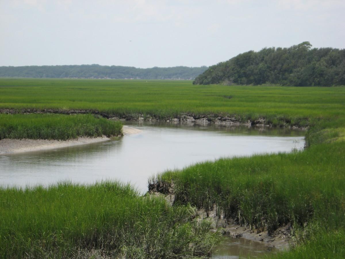 tidal creeks