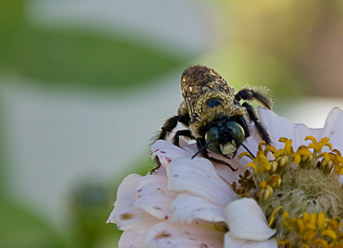 The Object of Backyard Beekeeping