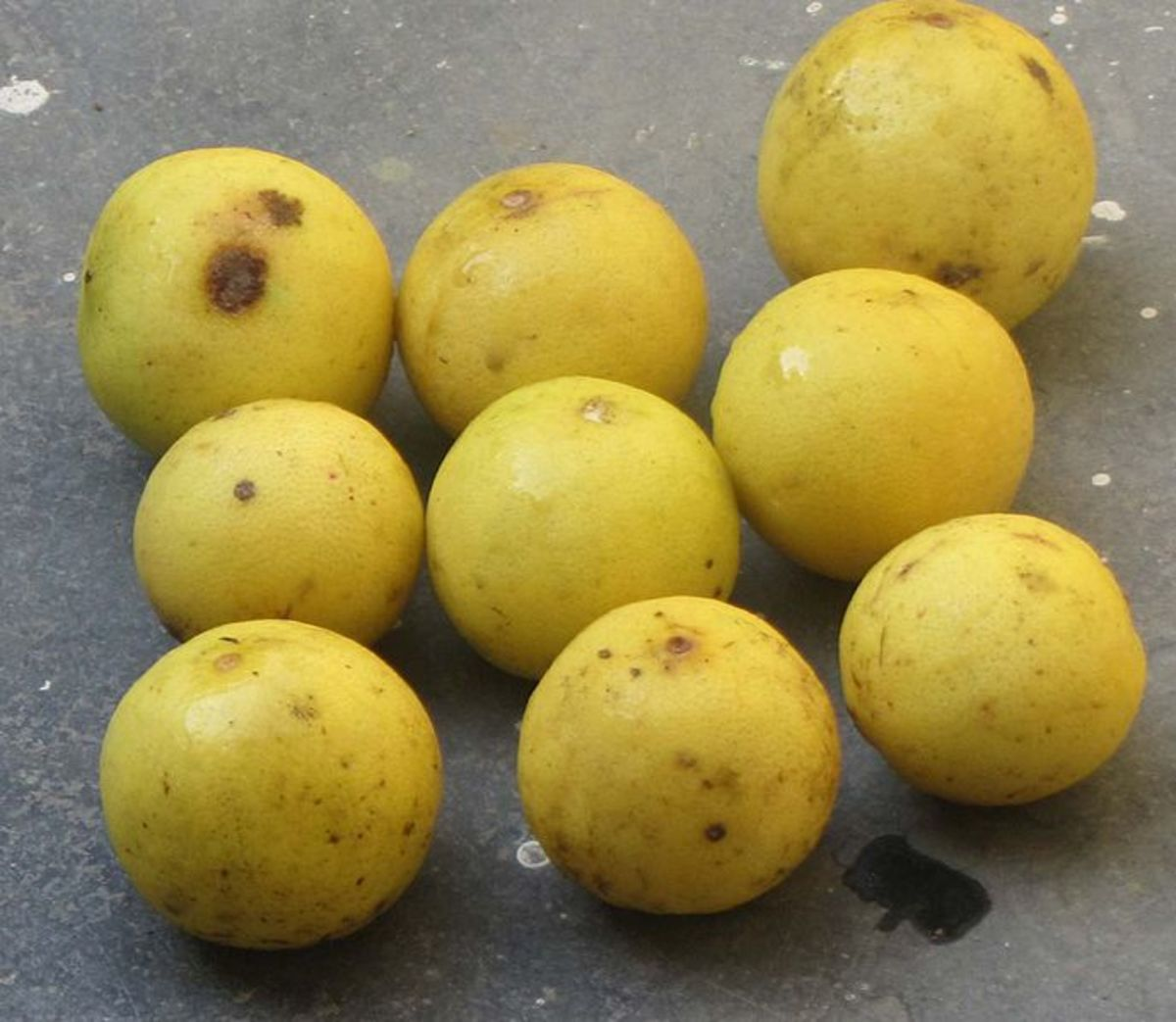 Sengai Podhuvan photographed these lemons in Chennai, Tamil Nadu, India on January 19, 2012. The Indian lemon is more sour and more juicy than the Western lemon.