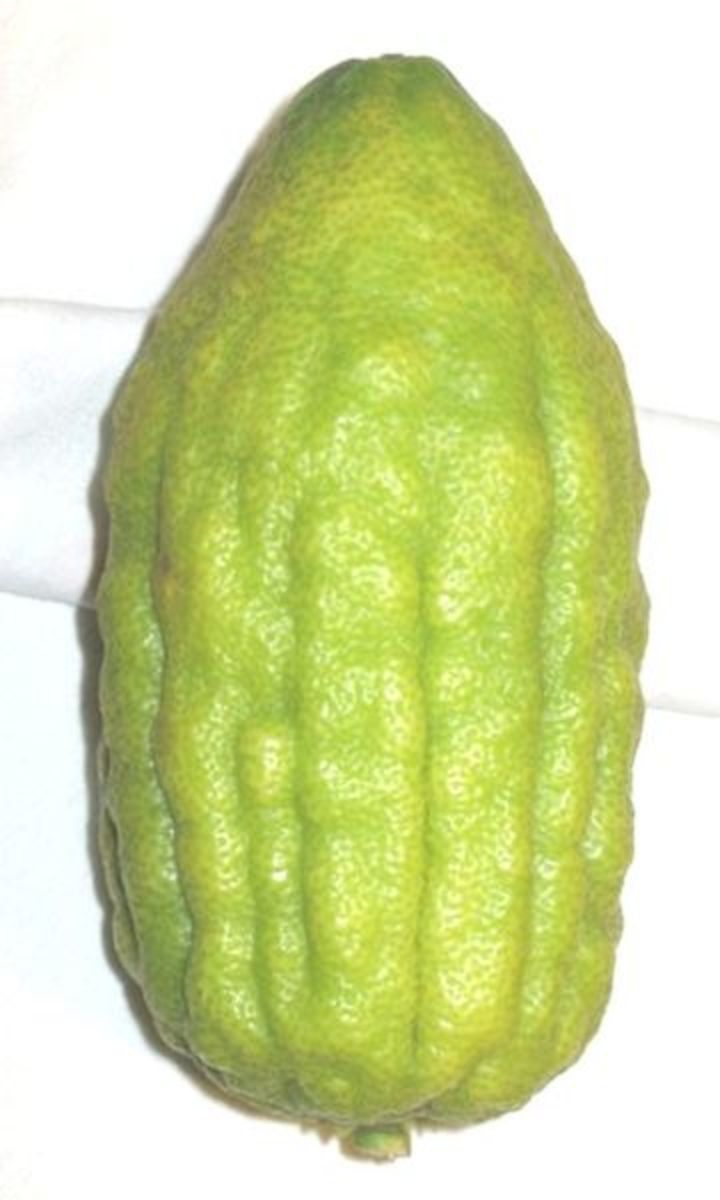 Yankelowitz photographed this citron on October 28, 2008.
