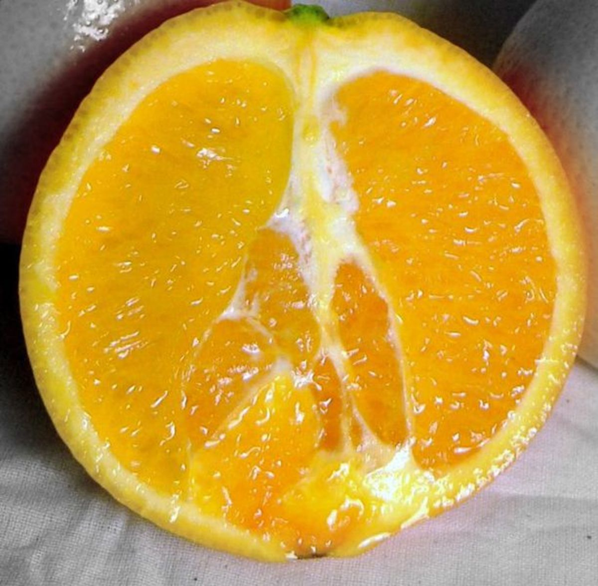 Yongxinge photographed this navel orange on March 14, 2006.