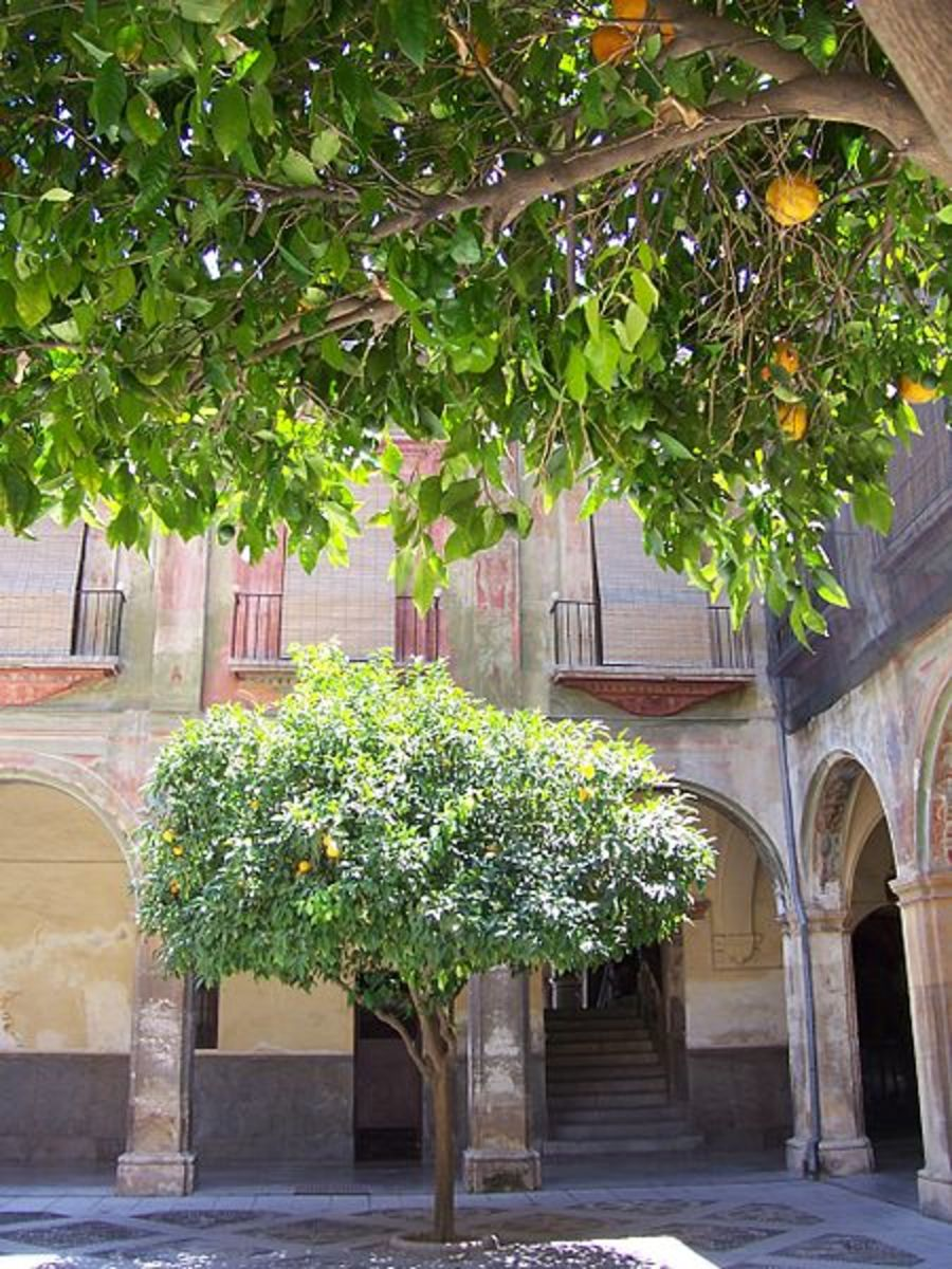 Paul Munhoven photographed these orange trees in Granada, Spain  on July 29, 2007.