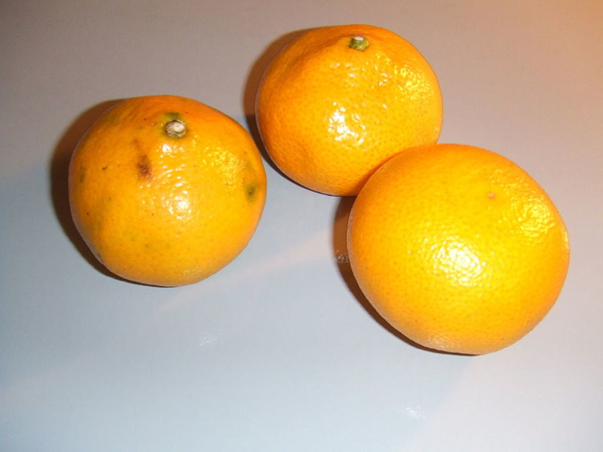 These satsuma oranges grown in Chile were purchased in the Netherlands and photographed by  Hans B. on  April 20, 2006.