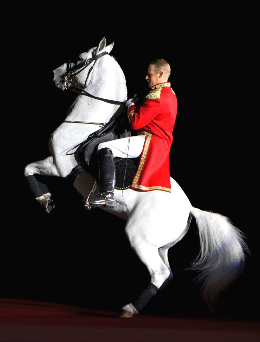 One of the famous Lipizzaner stallions.