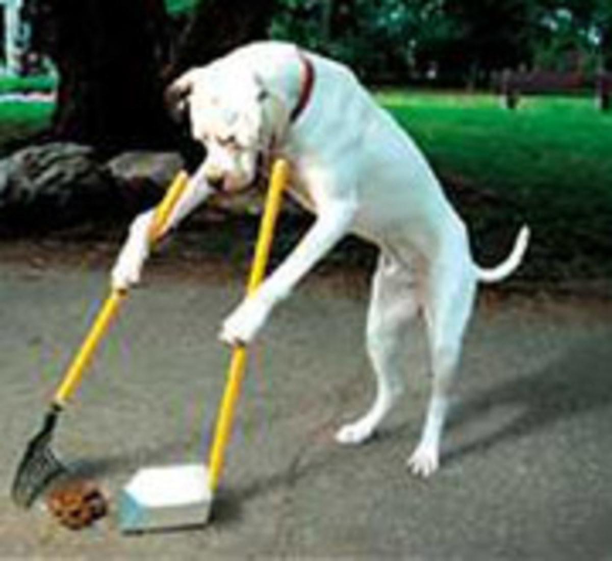 Pet Poop Scooping Services