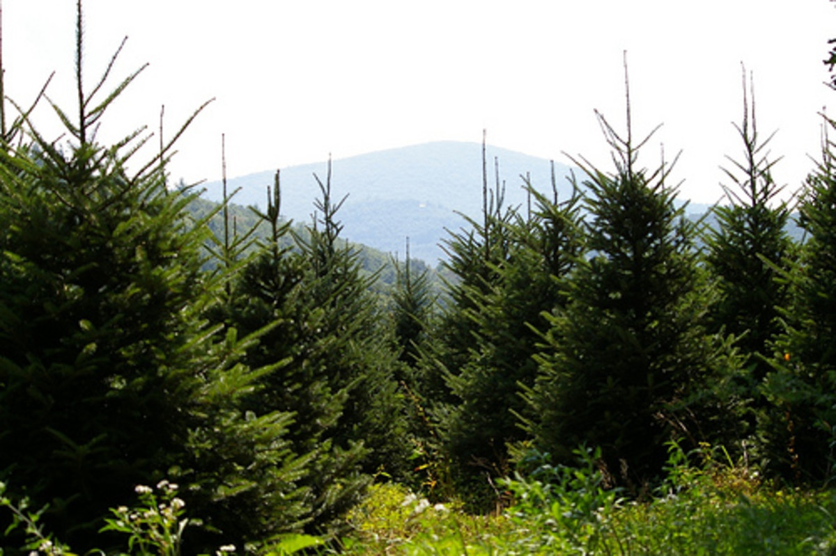 Christmas Tree Farm.  Creative Commons, Flickr.com.