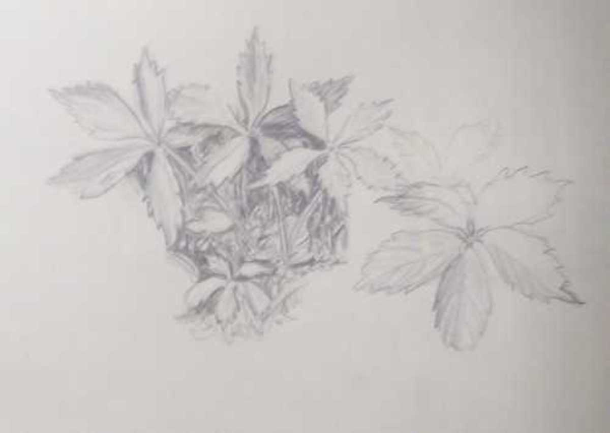 Nature Objects Drawing Pencil Drawing of One Object