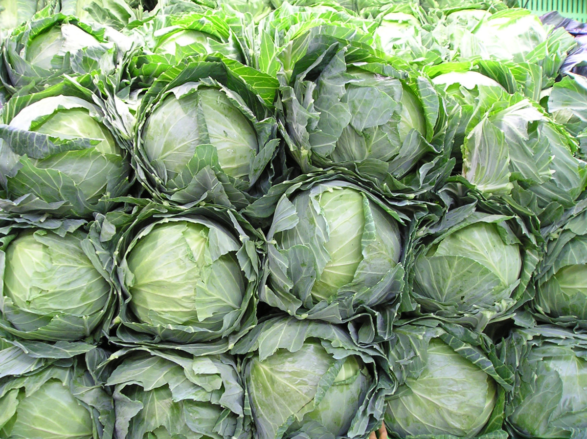 How To Make Cabbage Rolls The Old Fashioned Way