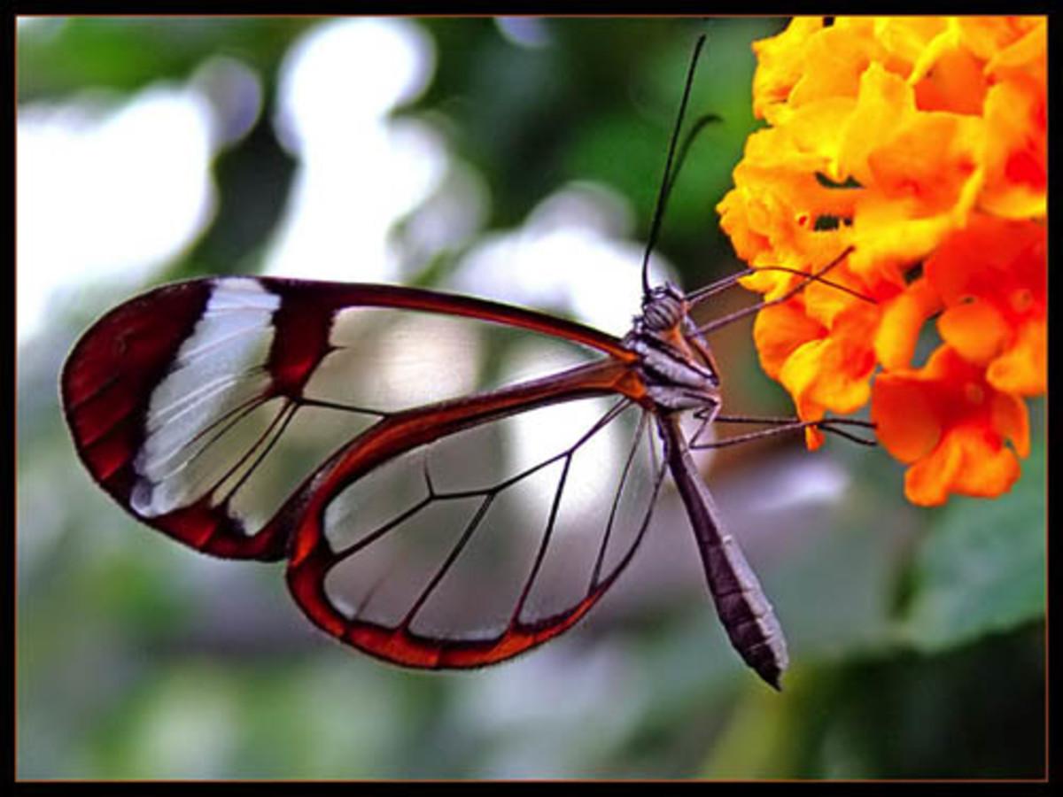 how-to-make-deep-fried-butterflies