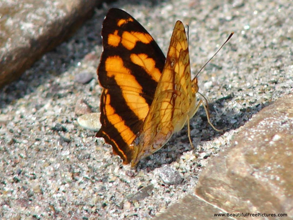 Change is healthy. The butterfly is a sign that there has been a metamorphosis.