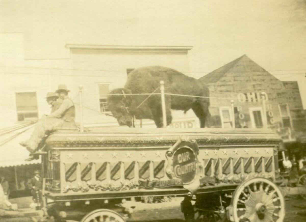 Buffalo and a circus parade wagon, around 1915; Located in Oklahoma, town unknown