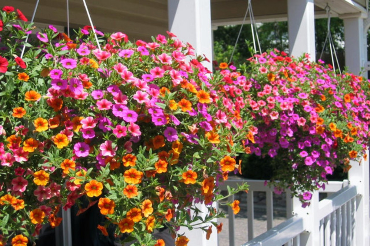 Colorful flowers add a finishing touch to the cottage style front porch.