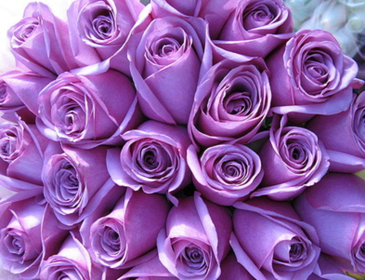 roses-and-their-meaning