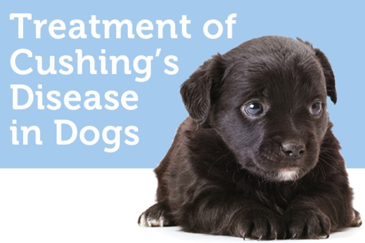 canine-cushings-syndrome-in-dogs