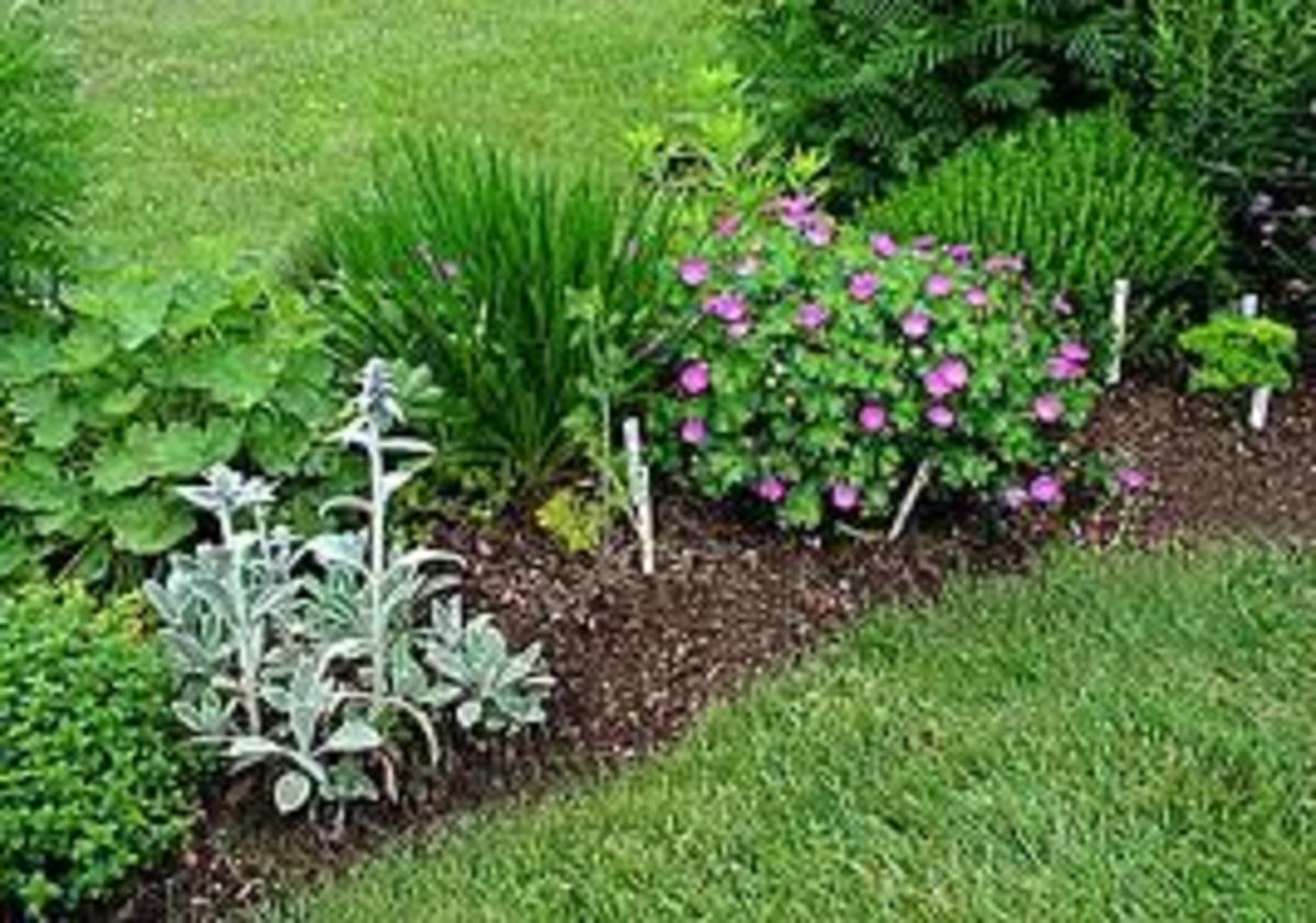 grandmothers-gardens