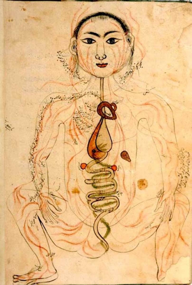Arabic Anatomy Manuscript