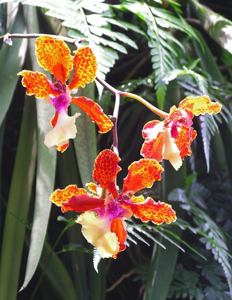 The Singapore Gardens are renowned for the orchid collection which amounts to thousands of varieties. If you love orchids, you might never come out.