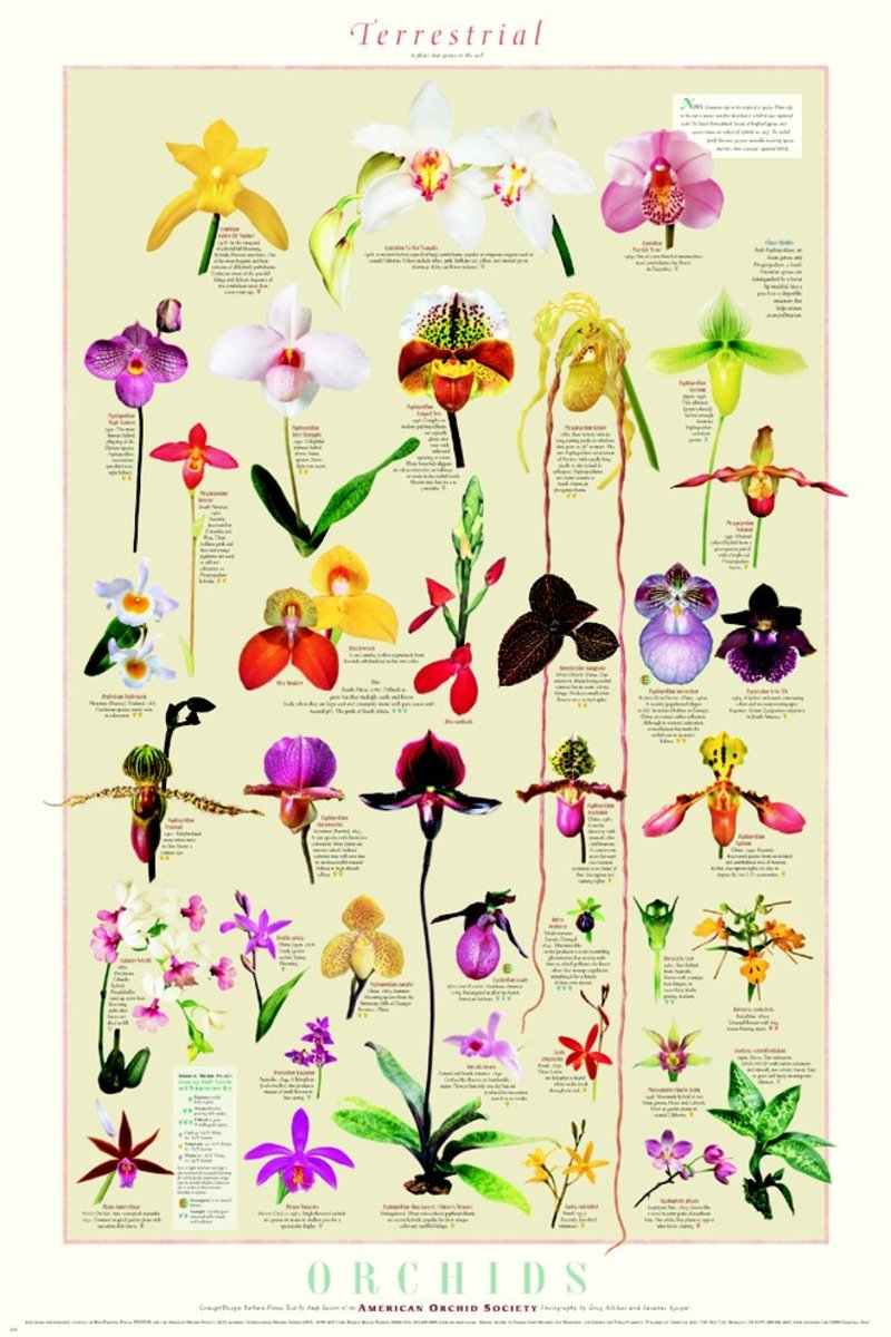 Here are a few of the many varieties of orchid colors and shapes. In this case, orchids have inspired many a tattoo.
