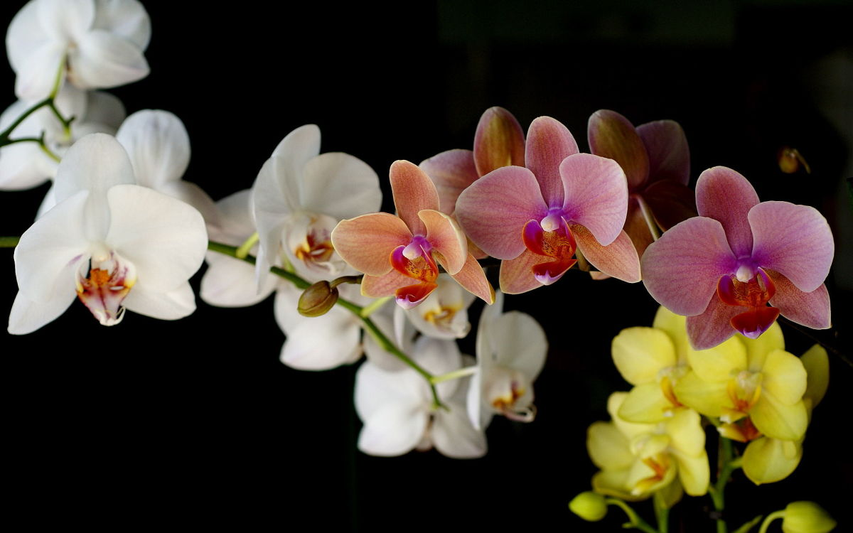 Here are just a few colors that orchid blooms come in.