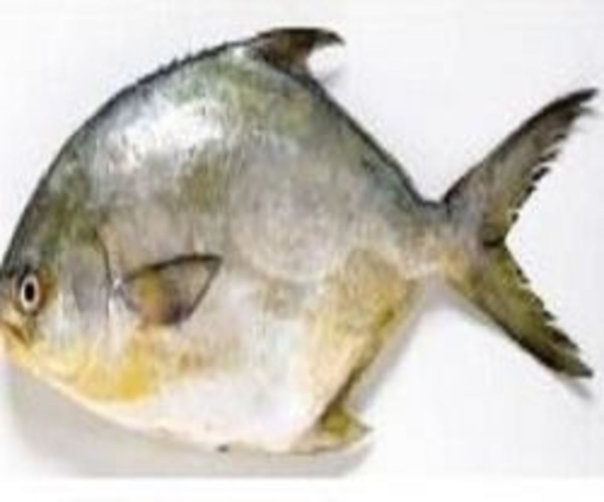 Delicious Recipes For Cooking Pompano