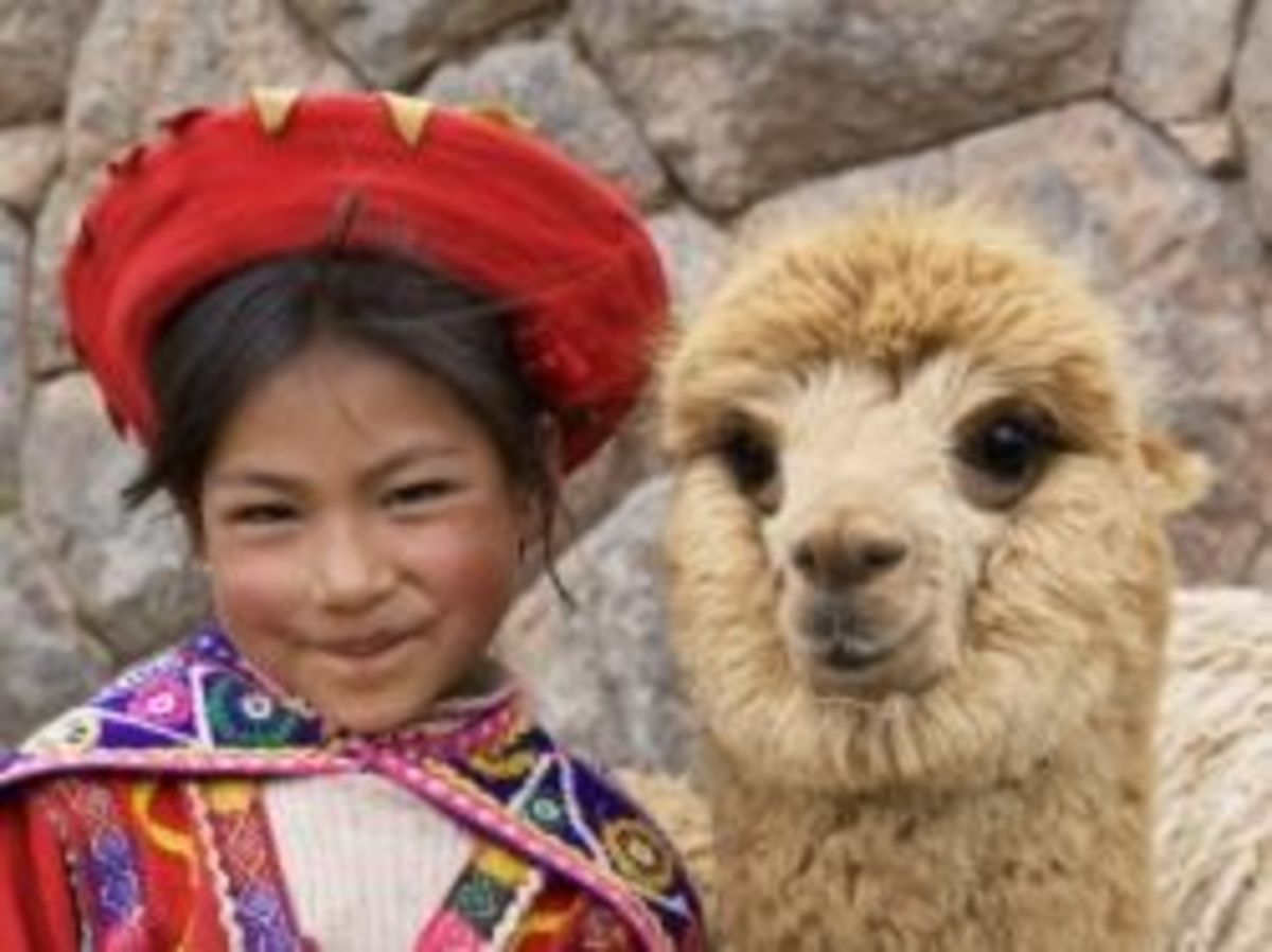 Girl in Native Dress with Baby Alpaca