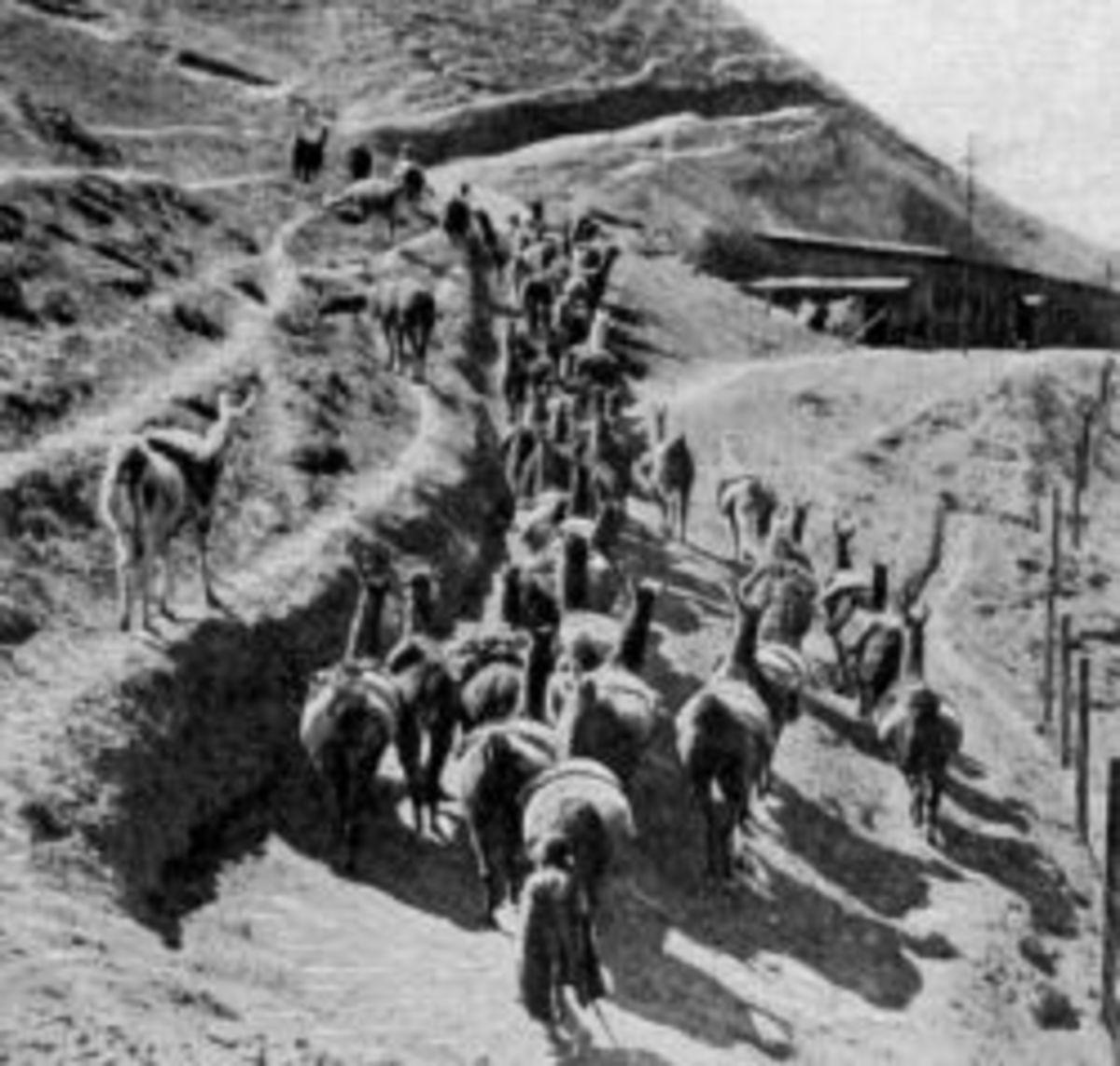 Andes Llamas