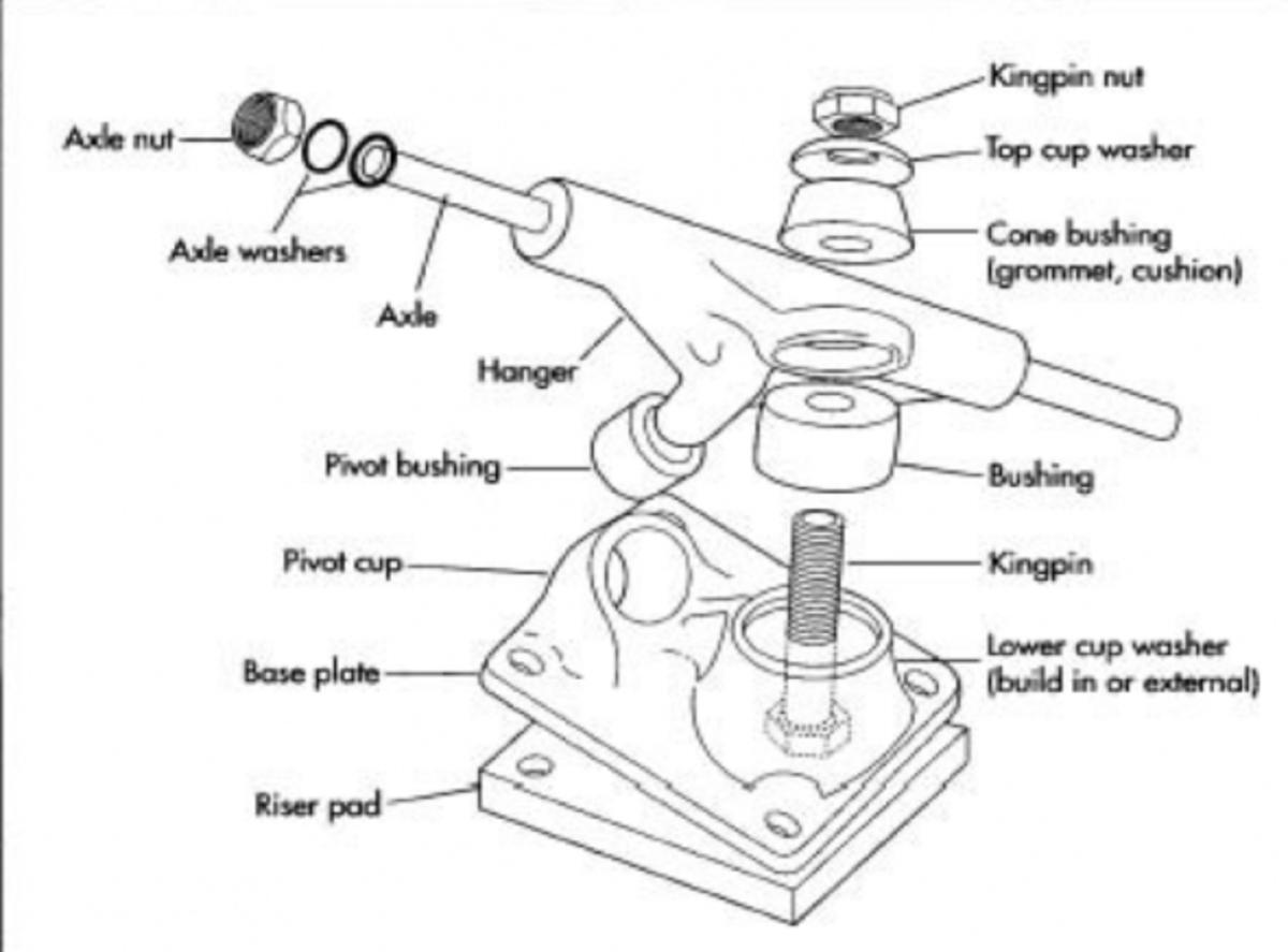 longboard-parts-anatomy-of-a-longboard