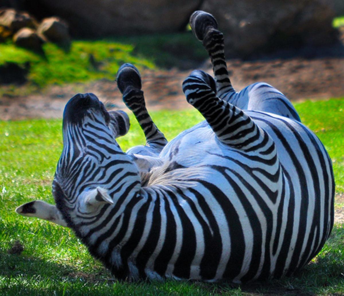 Dysfunctional Zoos