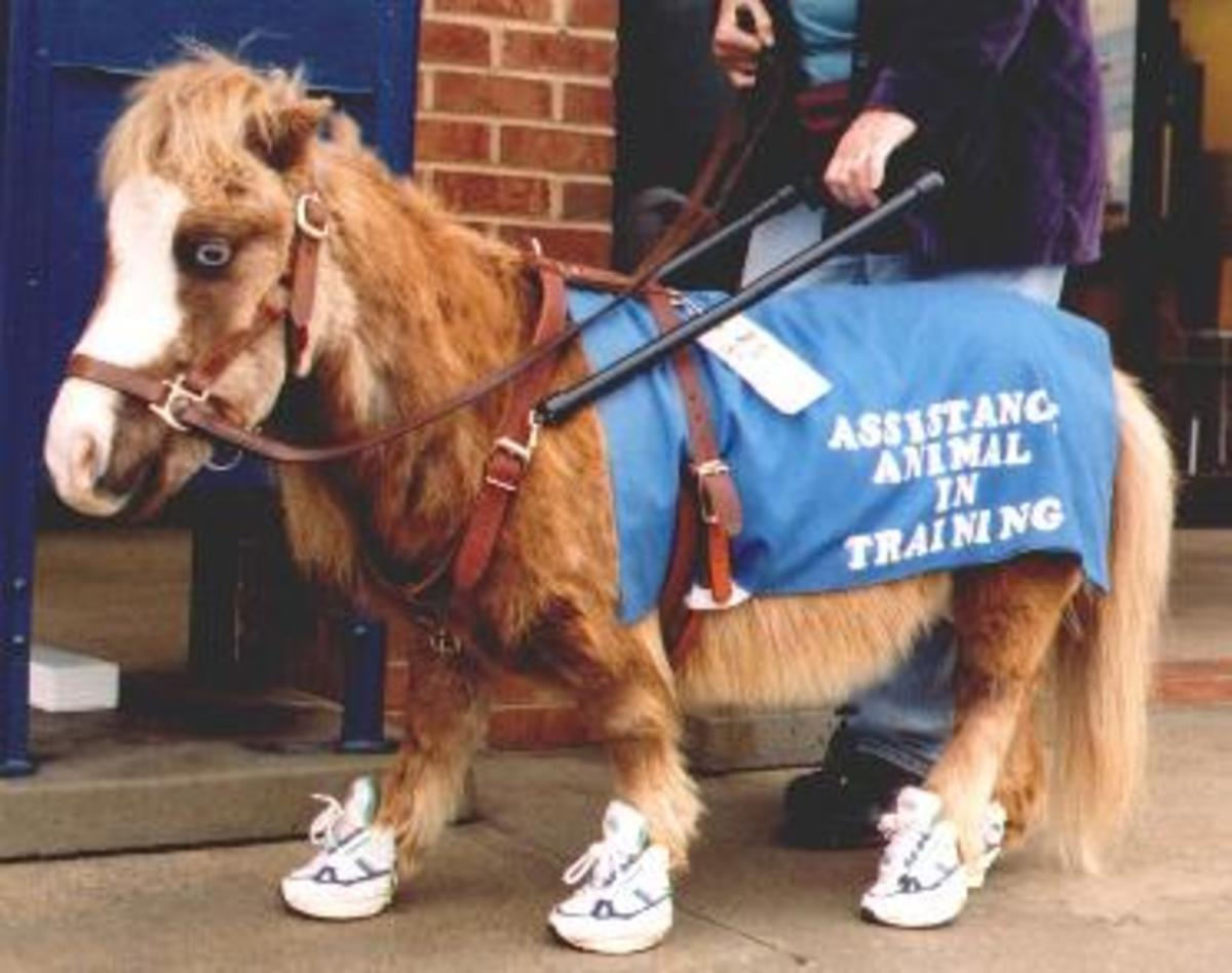 Twinkie, the Guide Horse Foundation mascot.