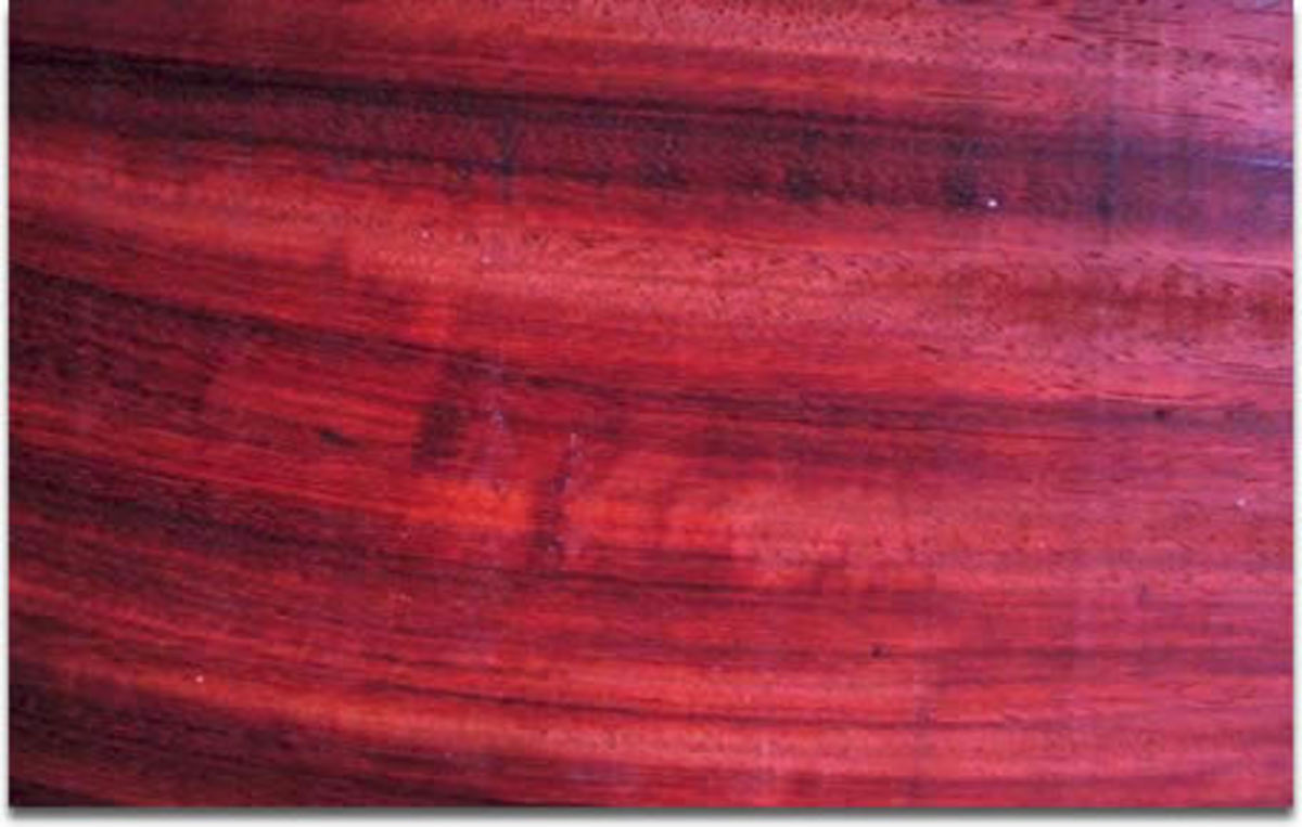 Closer look at the wood of  brazilwood.