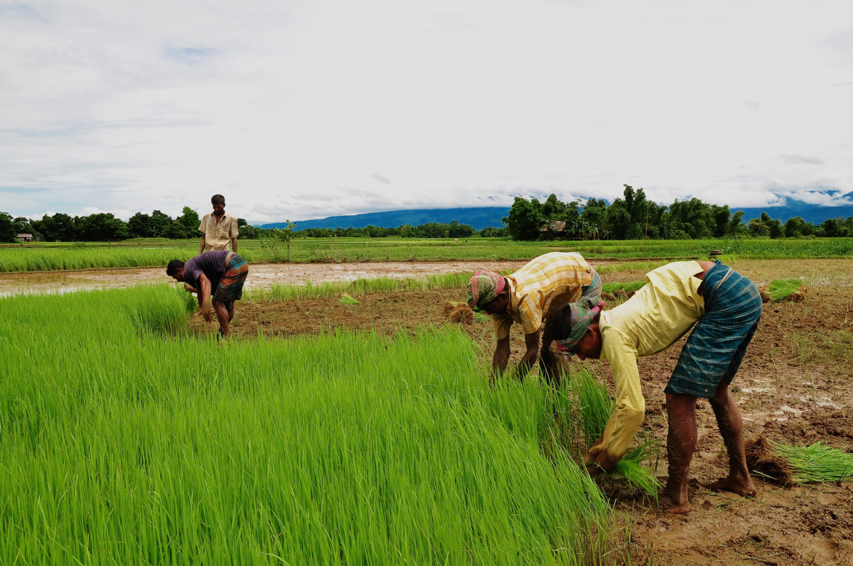 Farmers working in Agricultural Lands