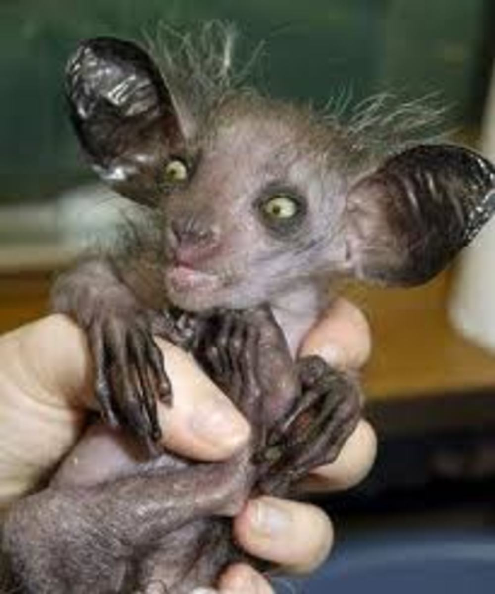 9 of the Ugliest Animals On Earth