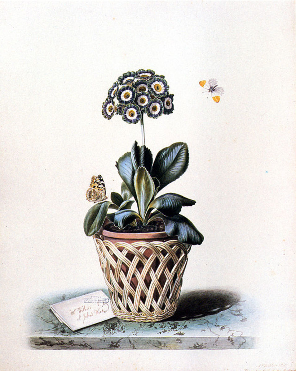 Accessorize Your Flower Pots with Cachepots