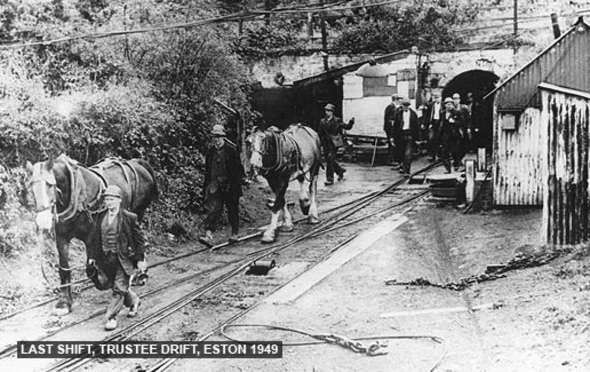 Last shift exits Trustee Drift, 18th September, 1949, bringing out the 'Osses' that brought the laden wagons to the cable drum. This tramway joined the one from New Bank just above Low Drum