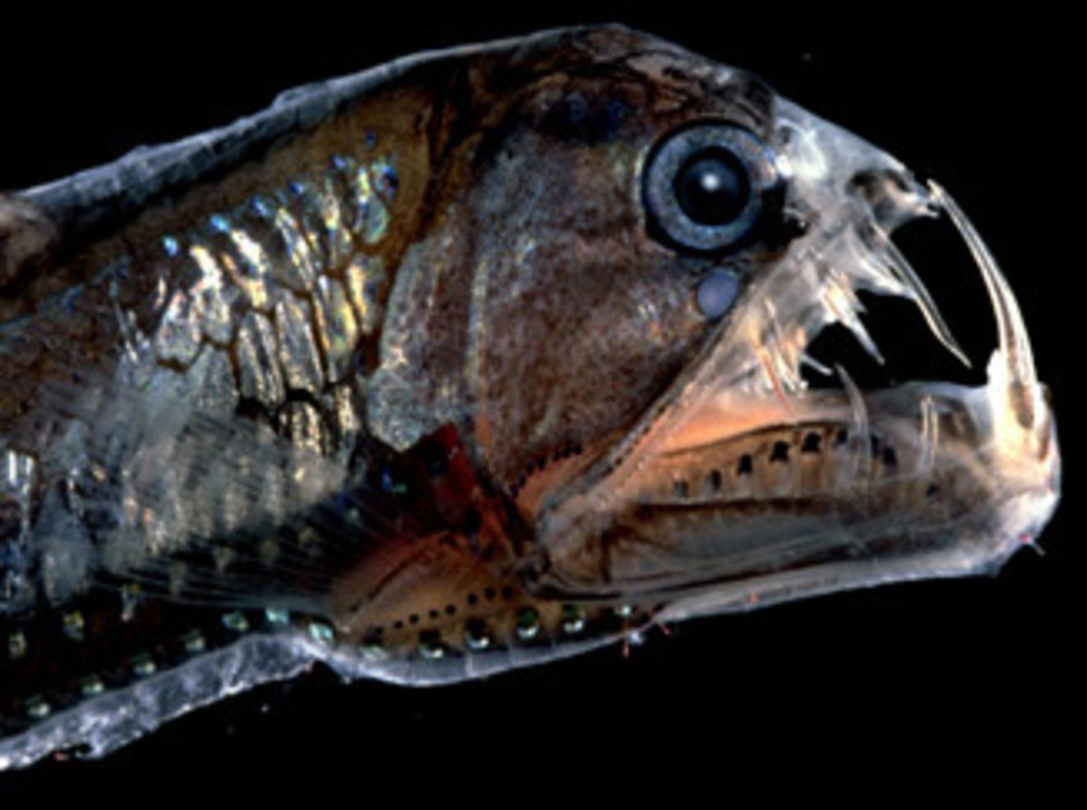 top-10-scariest-deep-sea-creatures