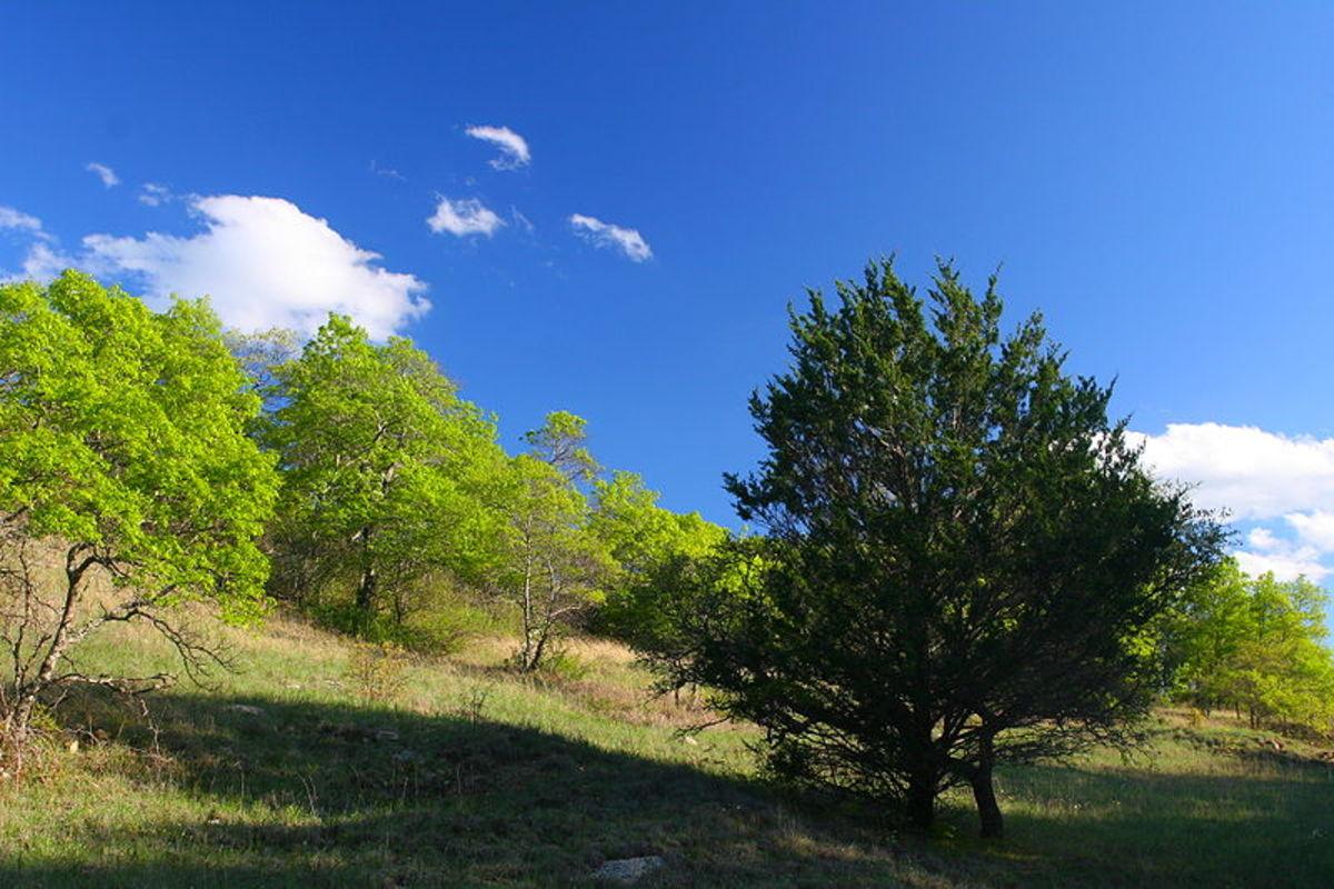 LBJ National Grassland, Texas.