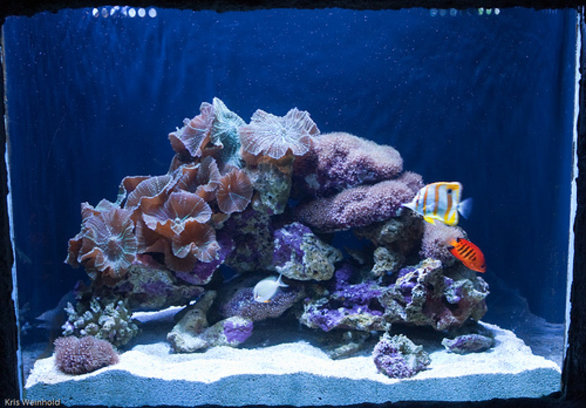 My aquarium is starting to crash what should i do hubpages for Starting a saltwater fish tank
