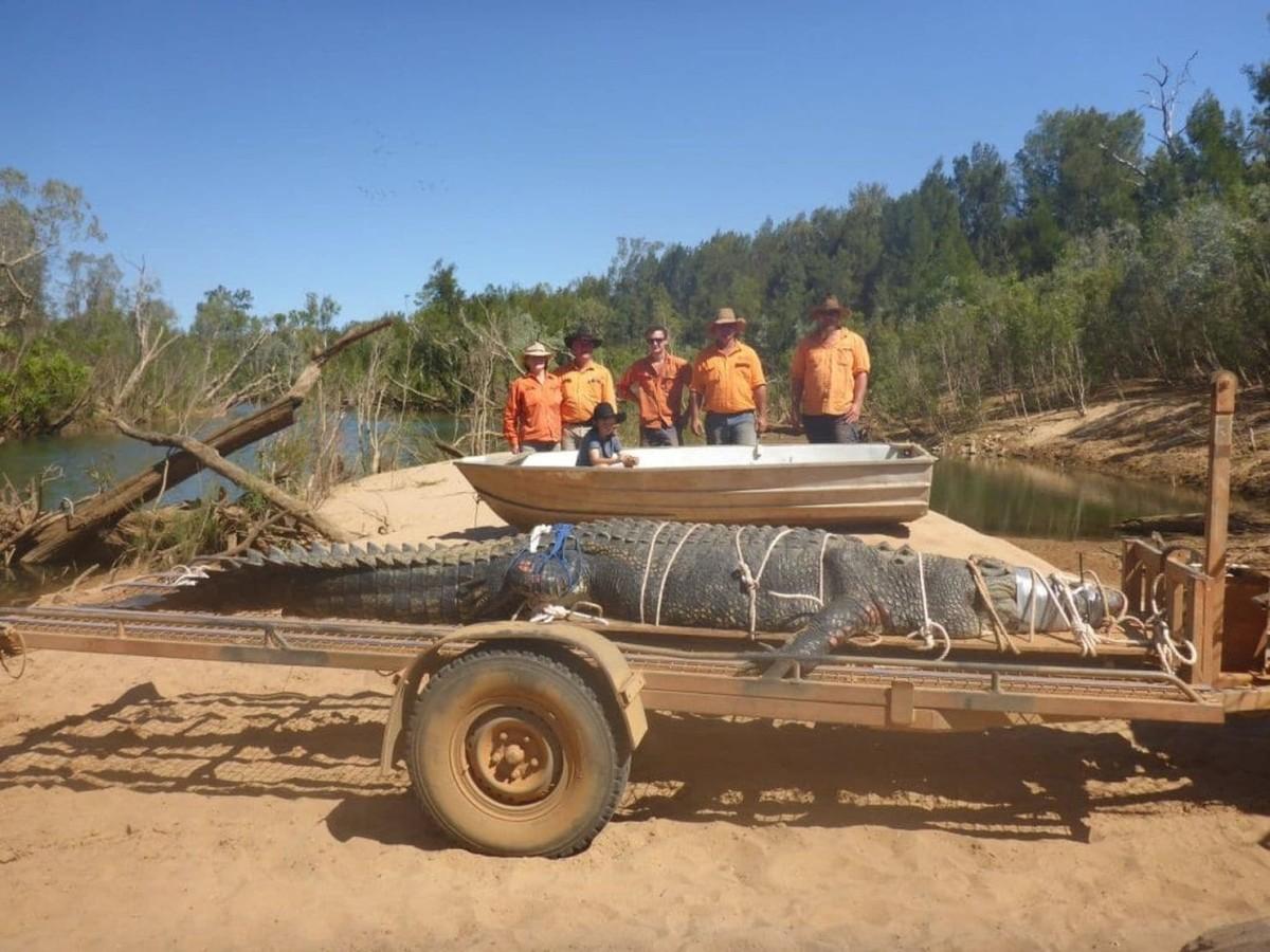 15-foot salty caught in Australia