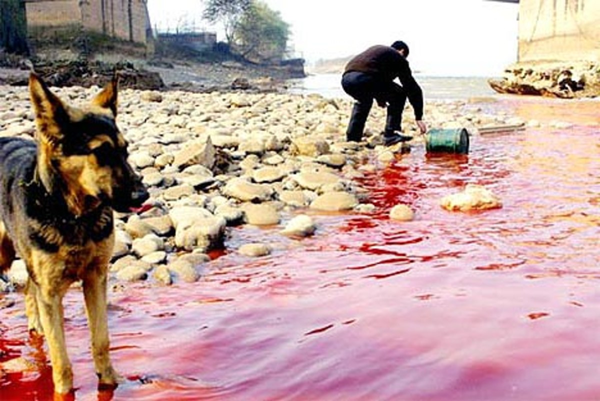 Man and beast using polluted water containing untreated industrial effluents.