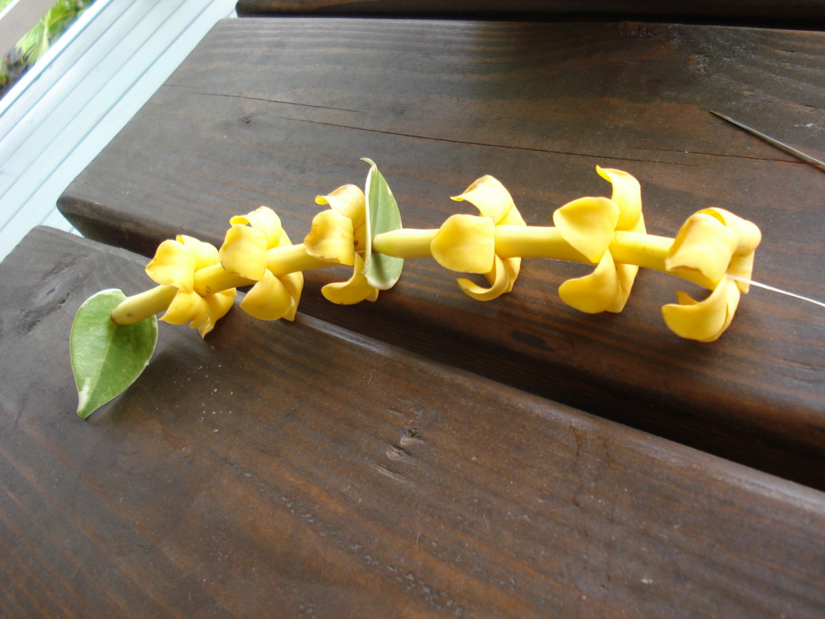 If you only have a few flowers to work with, stringing them from end to end for a simple lei.